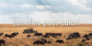 Jumelles pour safari